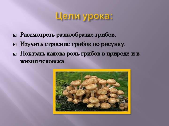 Какова роль грибов в жизни человека?