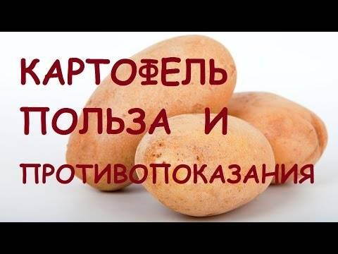 Картофель. польза и вред для организма — рацион.топ