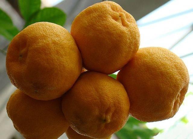 Вяленые лимоны и мандарины польза