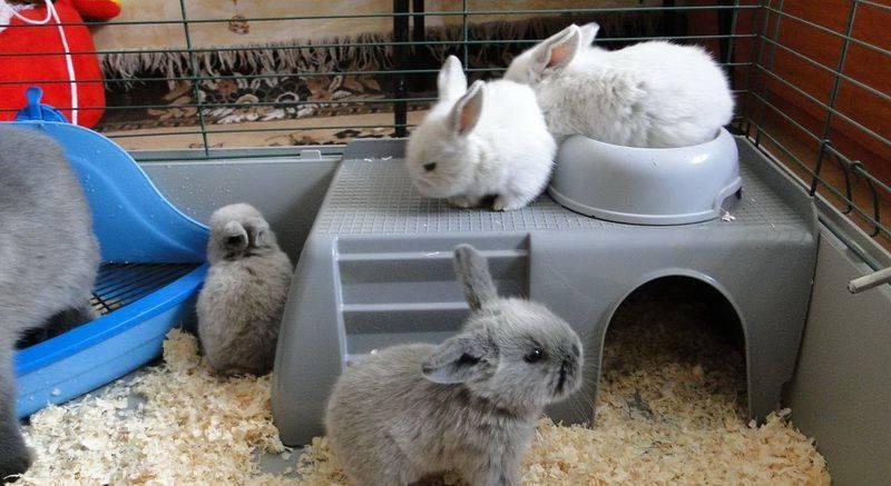 ᐉ как приучить кролика к лотку: обзор методов - zooon.ru