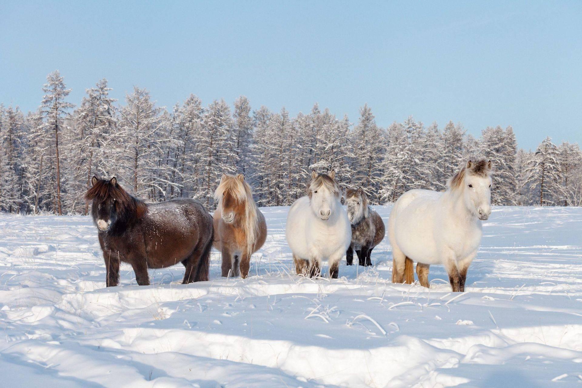 Интересные факты о лошадях и конном спорте
