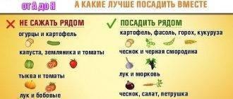 С чем можно сажать морковь: хорошая ли совместимость с укропом, с какими соседями нельзя сеять корнеплод в открытом грунте на одной грядке или между полос? русский фермер