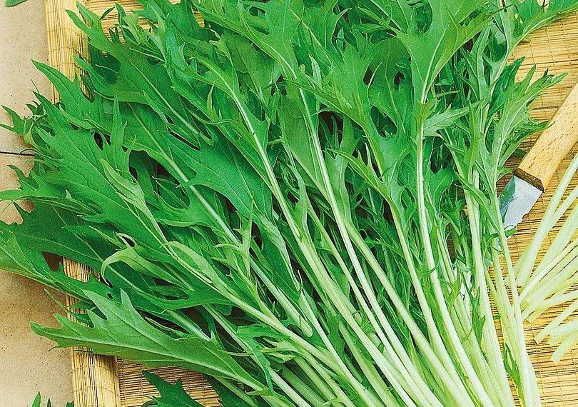 Японская капуста (мизуна): польза, выращивание, уход | food and health