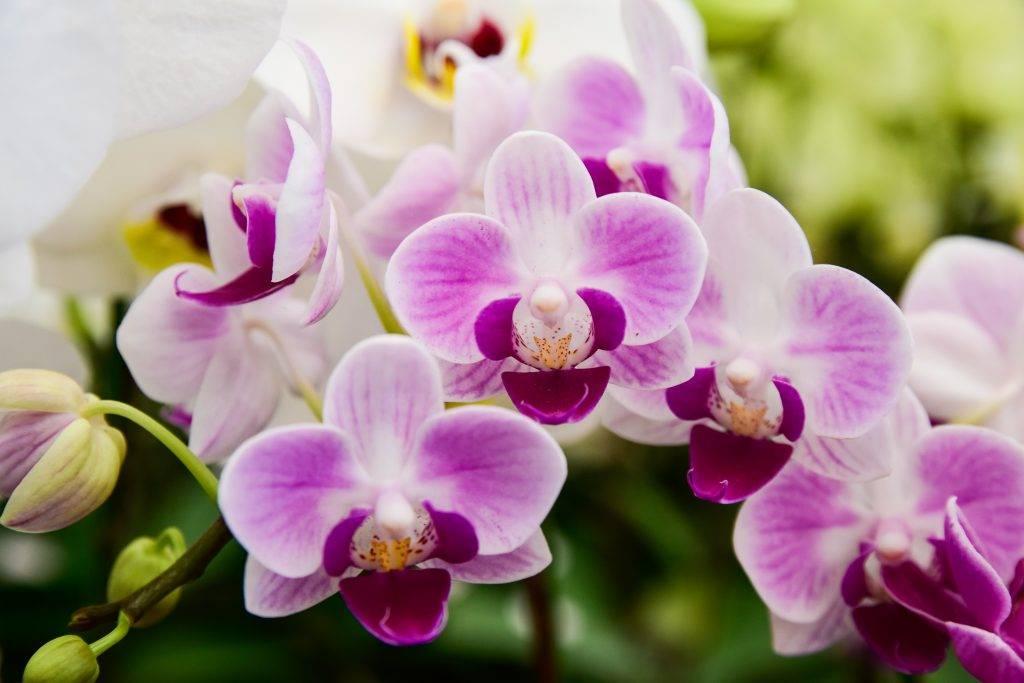 Разновидности орхидей – названия цветов с описанием и фото