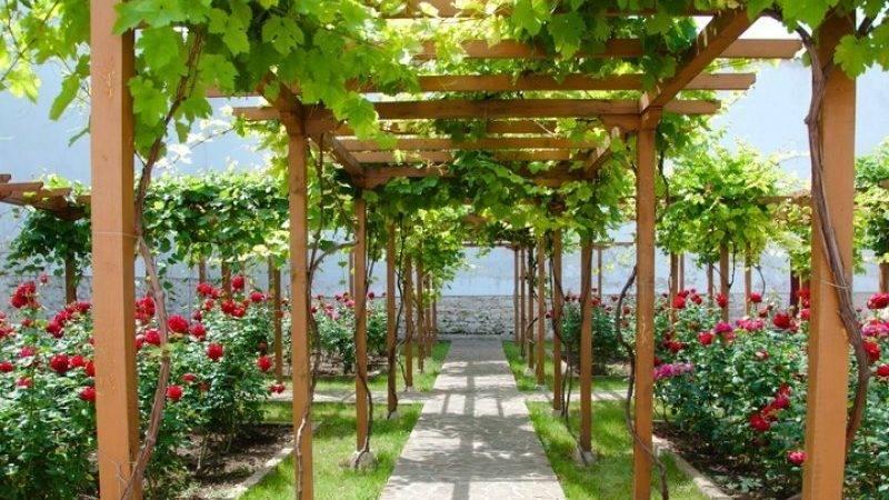 Как сформировать южный навес из винограда в подмосковье: личный опыт на supersadovnik.ru