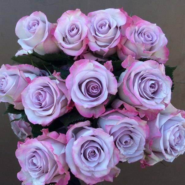 Чтобы розы дольше стояли в вазе: как продлить жизнь, сохранить срезанные розы