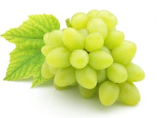 Сорт винограда ланселот: описание, признаки и как ухаживать за растением
