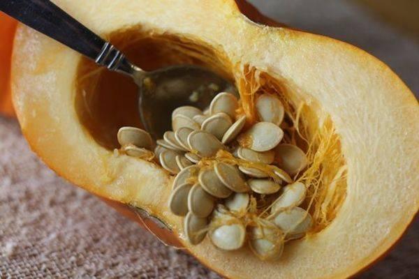 Как отличить кабачок от тыквы по плодам?