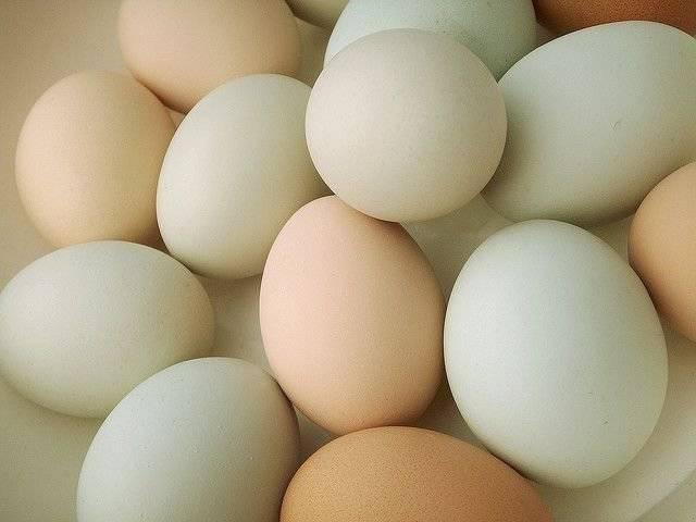 Почему куры несут яйца без скорлупы и что делать