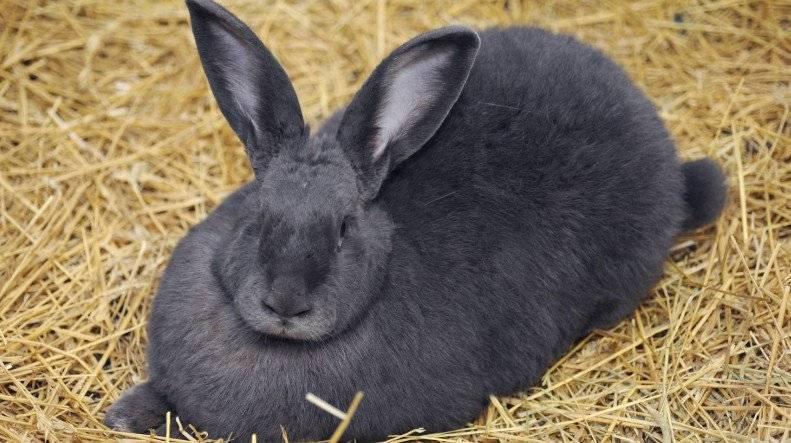 Сколько ходят беременные кролики и как принять роды?