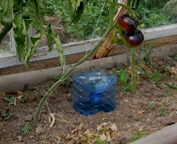 Капельный полив из пластиковых бутылок своими руками для огурцов