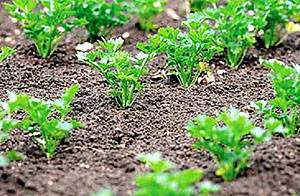 Семена моркови - пошаговая инструкция посева в яичные ячейки