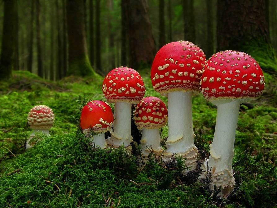 50 интересных фактов о грибах — общенет