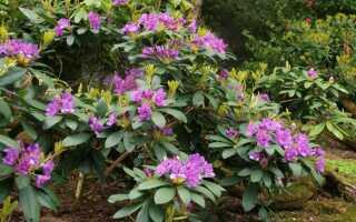 Узнайте больше о вечнозеленых растениях для сада