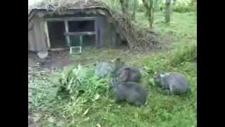 Разведение кроликов: уход и содержание в клетках