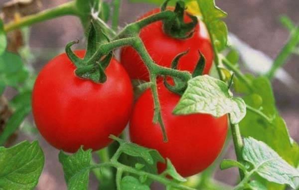 Гибрид жонглер f1 — детальное описание томата, достоинства, отзывы садоводов