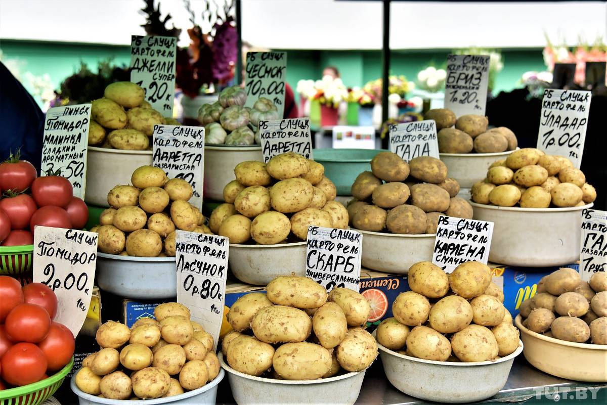 Картофель латона: описание сорта, фото, отзывы о вкусовых качествах, характеристика урожайности и советы по выращиванию и уходу