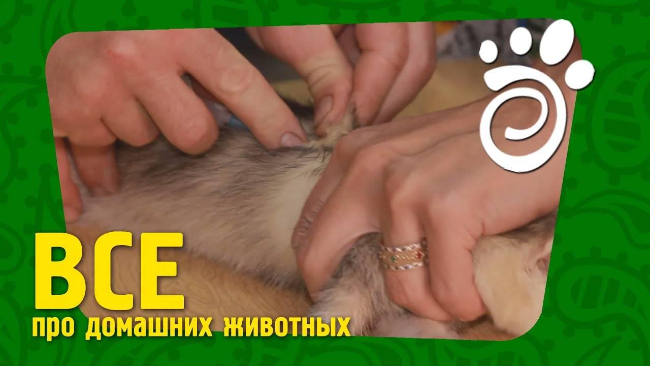 Ветеринарная клиника «фаворит»