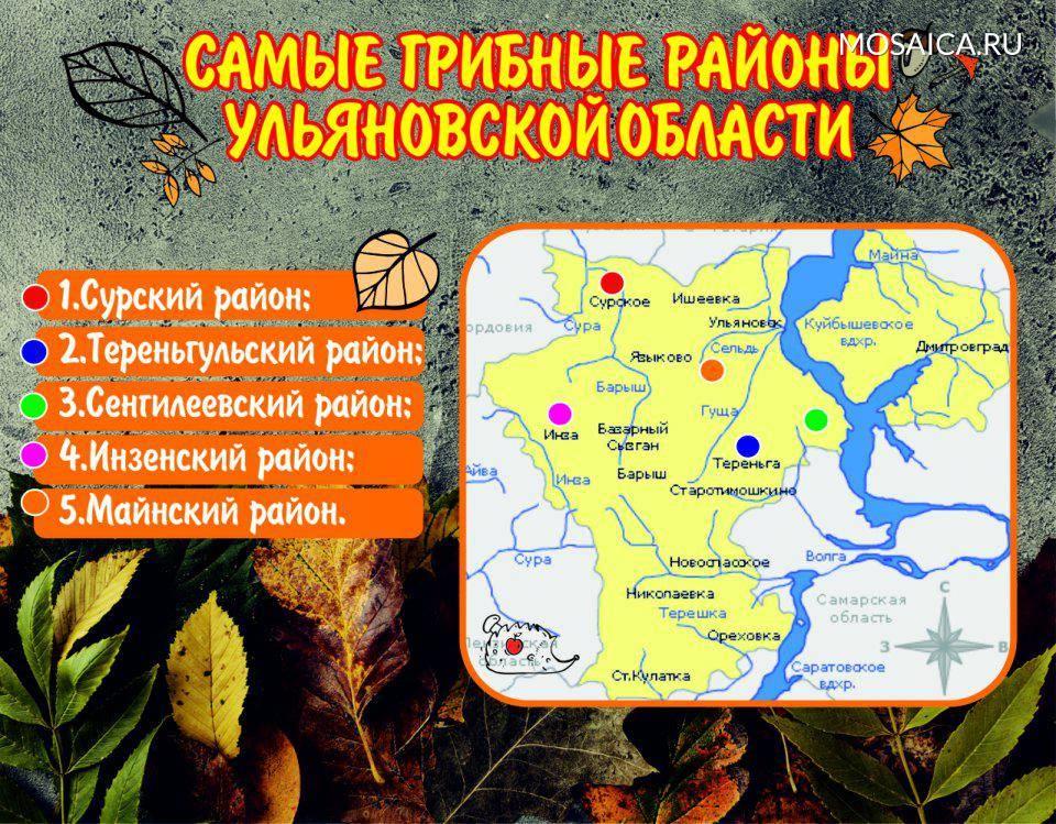 Виды грибов Ульяновской области