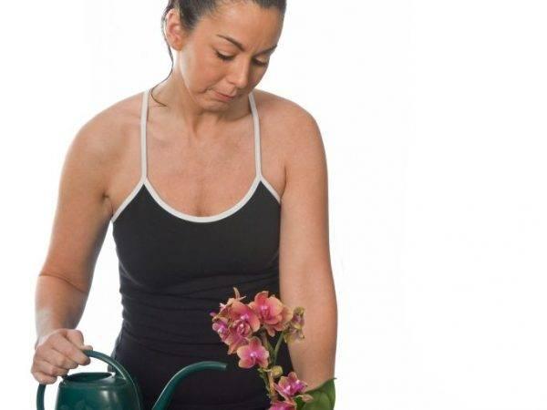 Как надо поливать домашнюю орхидею