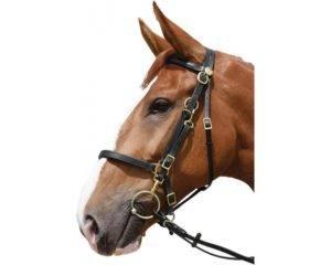 Уздечка для лошади: состав упряжи, виды сбруи