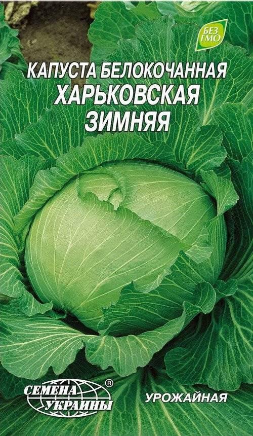 Сорта капусты с фото и описанием: лучшие разновидности и названия, характеристики, отзывы огородников