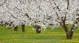 Обзор и схема подкормок деревьев яблони весной