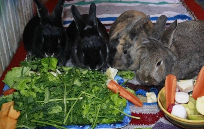 Чем кормить кролика в домашних условиях