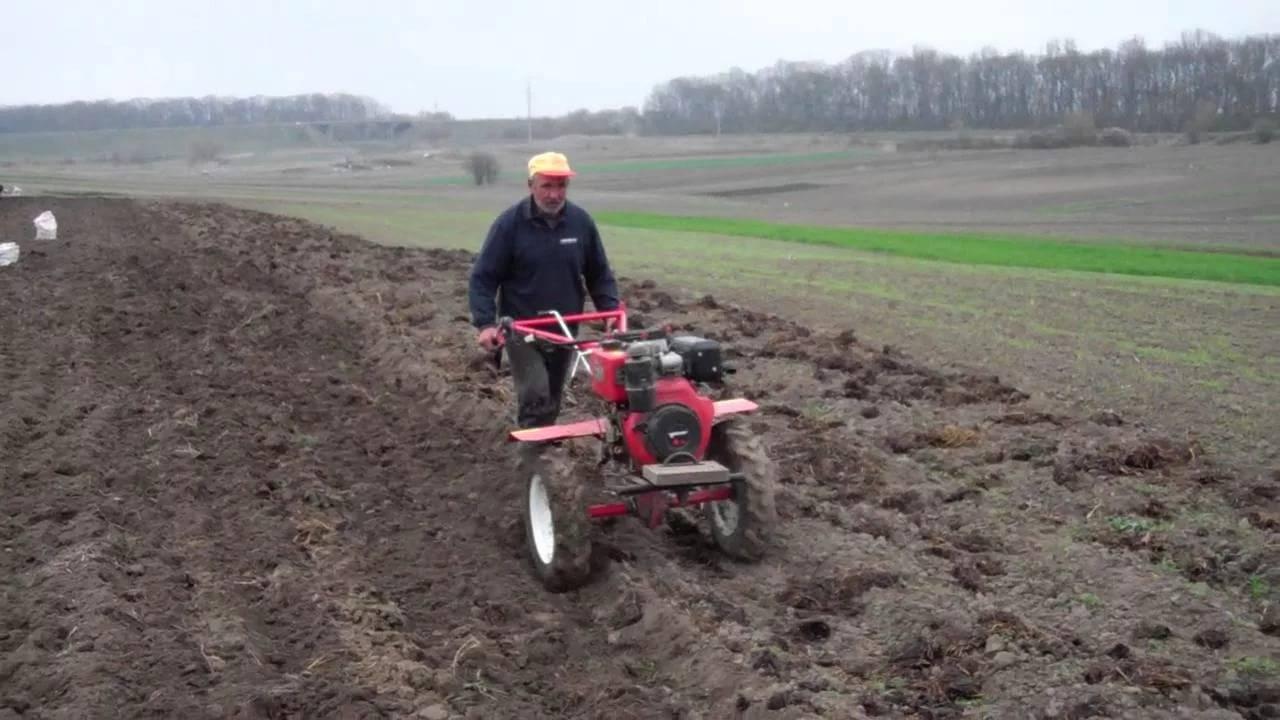 Высадка картофеля: подготовительные процедуры и разные способы
