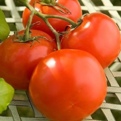 Томат марьина роща f1: описание сорта, особенности выращивания