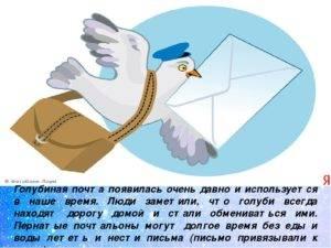 Как раньше работала голубиная почта