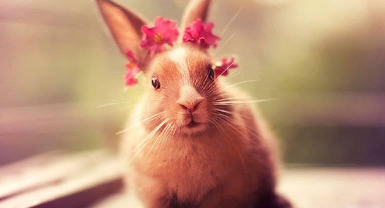 Кусачий декоративный кролик: как решить проблему?