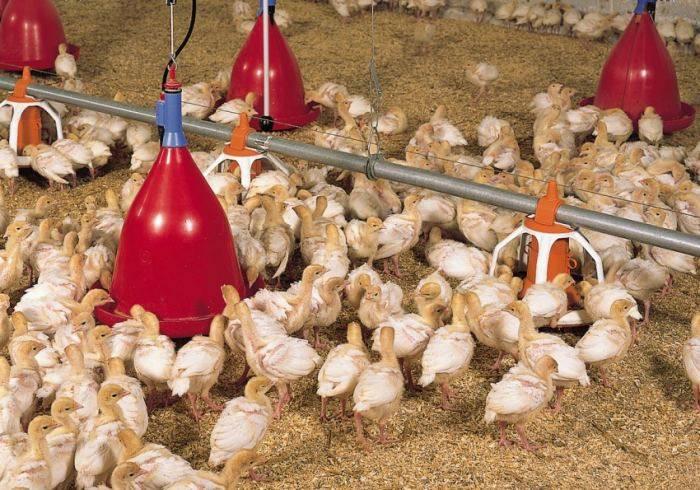 Поилки для кур и цыплят своими руками, чертежи, фото, этапы работы