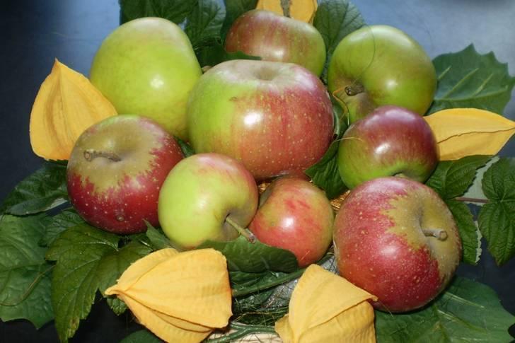 Как хранить яблоки на зиму в домашних условиях: правила и лучшие способы, сроки