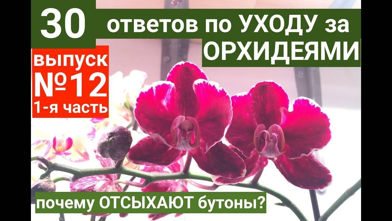 Интересные факты о том, почему вянет орхидея и что делать в такой ситуации