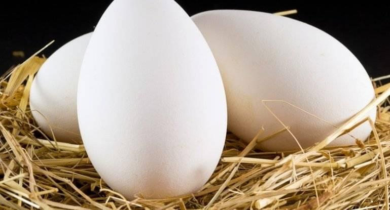 Гусиные яйца: польза и вред для человека, как готовить и употреблять