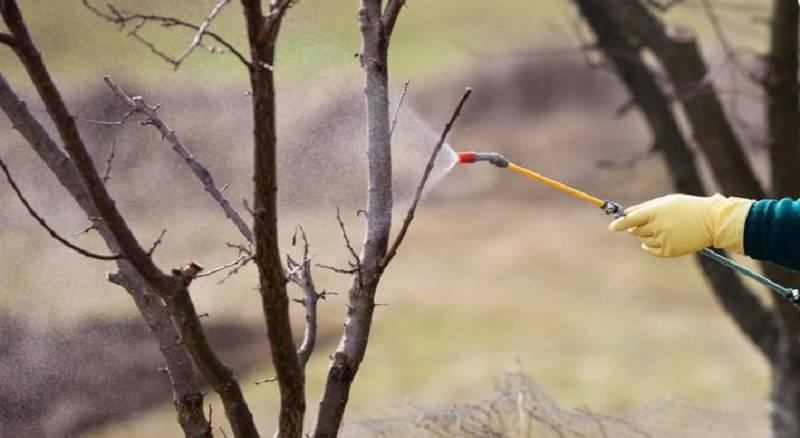 Обработка яблонь осенью от вредителей и болезней