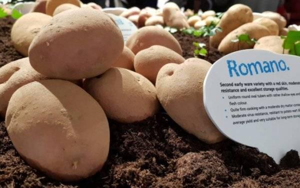 Описание ранних сортов картофеля с фото: классификация, основные характеристики и преимущества