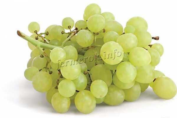 9 лучших сортов винограда без косточек: название, описание, как размножается
