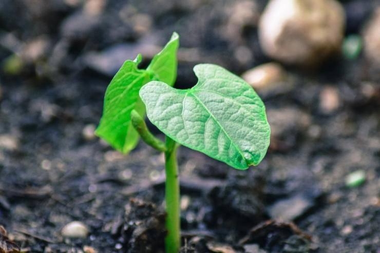 Как выбрать стимулятор роста для хвойных растений - советы от лигногумат | москва