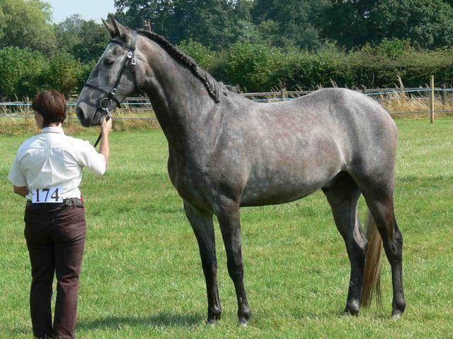Кабардинская порода лошадей: описание и характеристики, правила содержания
