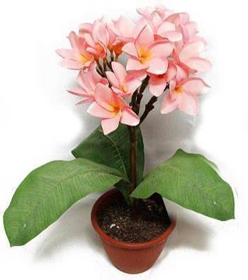 Очень пахнущие цветы: как называются