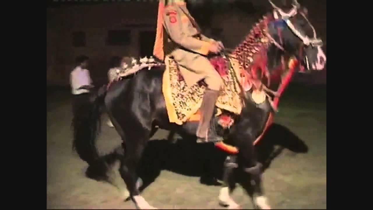Марвари лошадь. образ жизни и среда обитания лошади марвари | животный мир