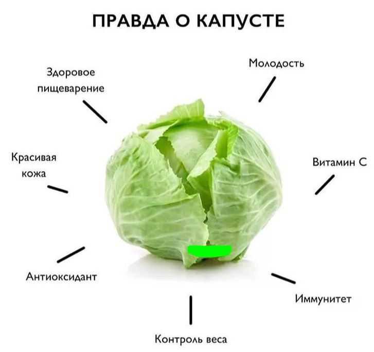 Польза и вред капусты