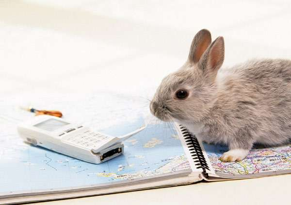 Почему могут слезиться глаза у кроликов и чем лечить в домашних условиях