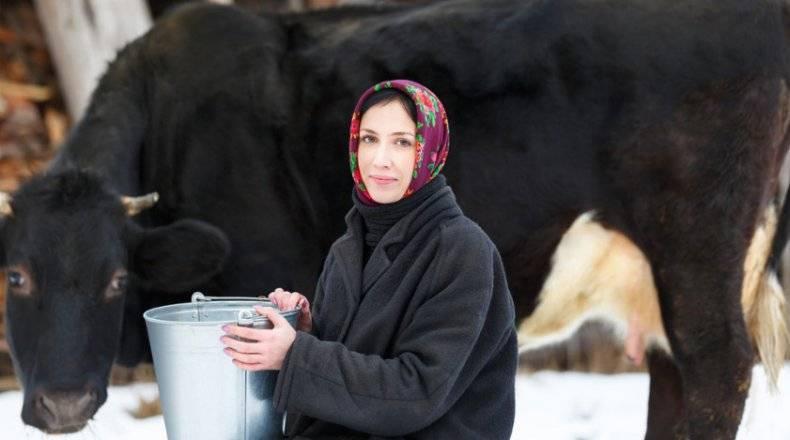 Содержание и кормление дойных коров