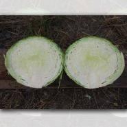 Текст книги «как вырастить отличный урожай овощей и бахчевых. рецепты, проверенные временем»