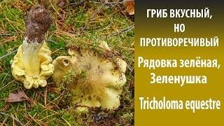 Грибы зеленушки: фото и описание, распространение
