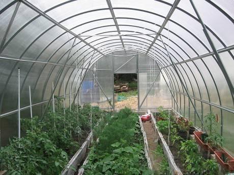 Способы подвязки томатов в теплице: инструкция выполнения фиксации кустов