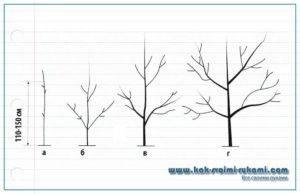 Обрезка грецкого ореха: как его правильно формировать весной, летом и осенью, когда лучше проводить весенние и осенние работы над многолетним растением и саженцем?